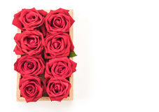 Red rose. On white background Stock Photography