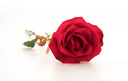 Red rose. On white background Stock Photo