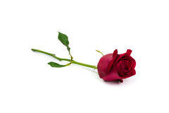 Red rose on white background. Beauty red rose for valentine day or other Royalty Free Stock Photography