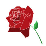 Red Rose Royalty Free Stock Photos