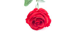 A red rose on white background, isolated. A red rose on white background Royalty Free Stock Photography
