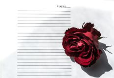 Red rose on white background. Notepad and pen Stock Images