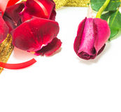 Red rose on white background, Valentines Day background Stock Image