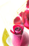 Red rose on white background, Valentines Day background Royalty Free Stock Photos