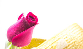 Red rose on white background, Valentines Day background Royalty Free Stock Photo