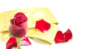 Red rose on white background, Valentines Day background Royalty Free Stock Image