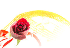 Red rose on white background, Valentines Day background Royalty Free Stock Photography