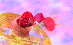 Red rose on white background, Valentines Day background Stock Photos