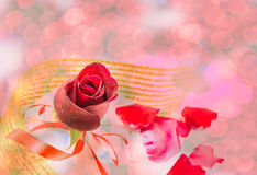 Red rose on white background, Valentines Day background Stock Images