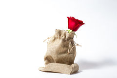Red rose on a white background and in a vase. Red rose in a vase and in a linen bag,on a white background Stock Photos