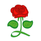 Red rose on white background. Vector illustration Royalty Free Stock Photography