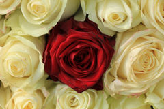 Red rose in white bouquet Royalty Free Stock Photos
