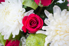 Red rose and white Chrysanthemum Royalty Free Stock Photography