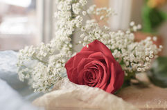 Red rose and white flowers Stock Photography