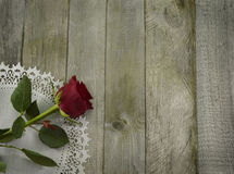 Red rose on white napkin Royalty Free Stock Image