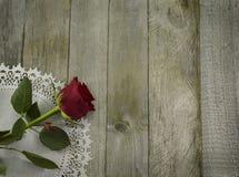 Red rose on white napkin Royalty Free Stock Image