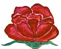 Red rose on white, painting Royalty Free Stock Images