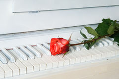 Red rose on the white piano Stock Photos