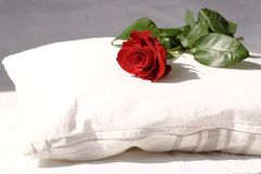 Red rose on a white pillow Royalty Free Stock Image