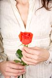 Red rose white shirt Royalty Free Stock Photography
