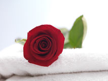 Red Rose on White Towel Royalty Free Stock Photography