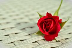 Red Rose on White Weaved Surface Stock Images