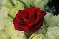 Red rose in a white wedding bouquet Royalty Free Stock Images
