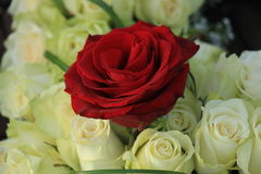 Red rose in a white wedding bouquet Stock Photo