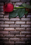 Red rose on wicker wooden matting copy space Stock Photos