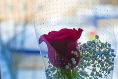 Red rose on the window close-up. Soft focus. stock photos