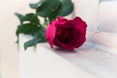 Red rose on the window. Red rose,red rose on the window. valenine, love, seasonal,flower Royalty Free Stock Photo