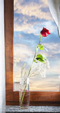 Red rose at the window Royalty Free Stock Photos