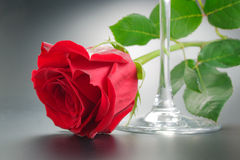 Red rose and wineglass. Red rose with green leaves arranged near wineglass close-up Royalty Free Stock Photography