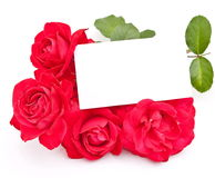 Red Rose With Card Royalty Free Stock Image