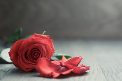 Free Red Rose With Petals On Wood Table Stock Images - 49869364