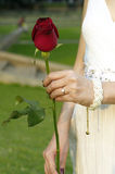 A red rose in woman hand. Young woman with a red rose in the park Stock Image