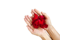 Red rose in the woman's hand Royalty Free Stock Photography