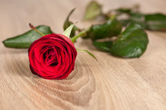 Red rose on wood Stock Photography