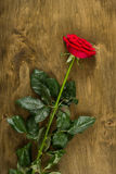 Red rose on wood background Royalty Free Stock Photography