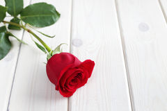 Red rose on wood background Stock Photography