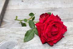 Red rose. On wood floow Stock Photography