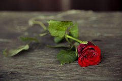 Red rose on wood Royalty Free Stock Images