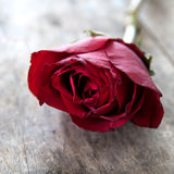 Red rose on wooden background Stock Image