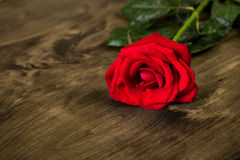 Red rose on wooden background Stock Photo
