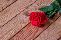 Red rose on a wooden background Stock Photography