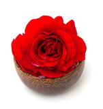 Red rose in a wooden bowl Royalty Free Stock Image