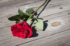 Red rose on wooden floor Stock Photos