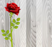 Red rose on wooden texture Royalty Free Stock Photo