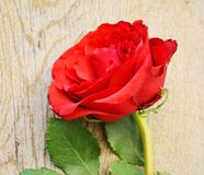 Red rose on wooden vintage background Royalty Free Stock Photo
