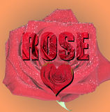 A red Rose. The word Rose with a heart Stock Images
